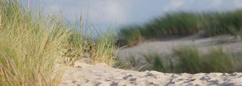Dunes de Montalivet
